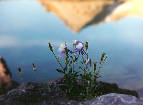 Ice Lake and Columbines
