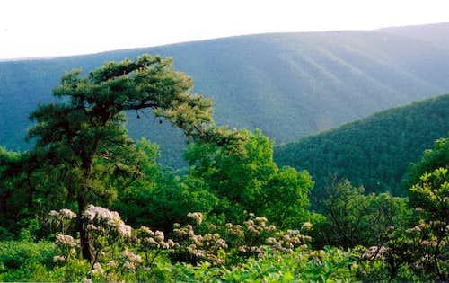 Northern Allegheny Plateau