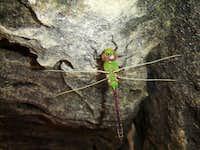 Dragonfly Bouldering