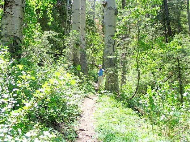The lush trail high up on Bill Williams Peak