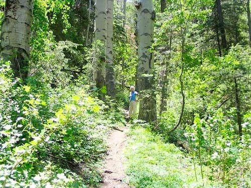 Bill Williams Mountain Trail #21