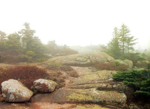 Cadillac Fog and Lichen