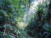Gorongosa Forest