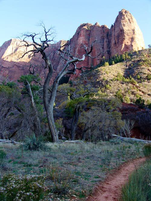 Shuntavi Butte, Kolob Canyons, Zion National Park