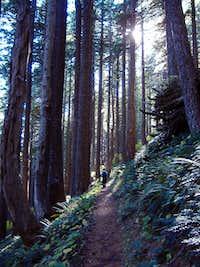 On the East Ridge Trail.