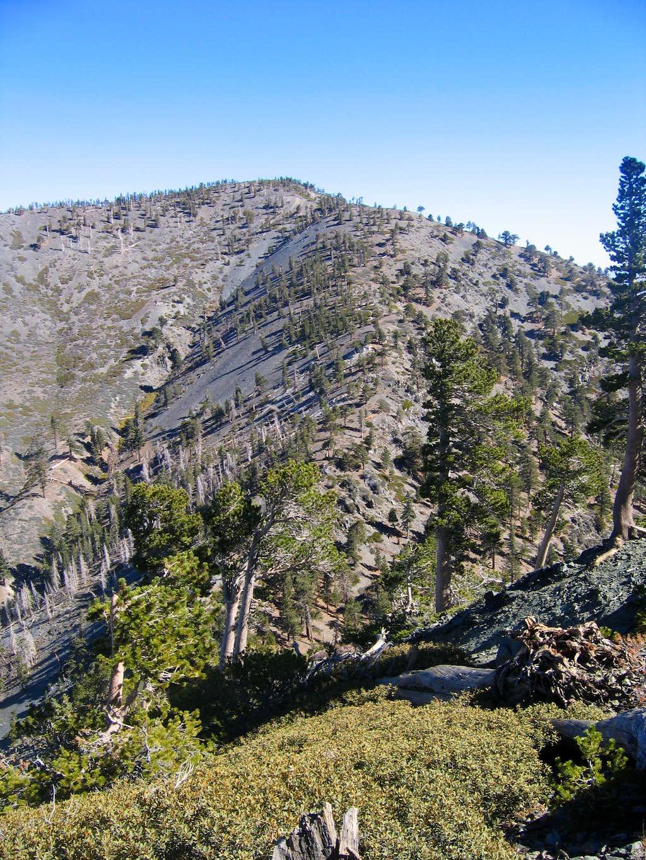 View of Dawson Peak