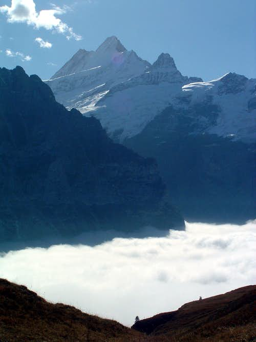 Schreckhorn over clouds