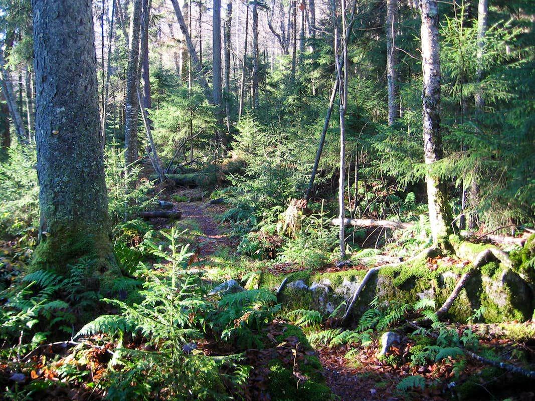 Virgin Forest : Photos, Diagrams & Topos : SummitPost