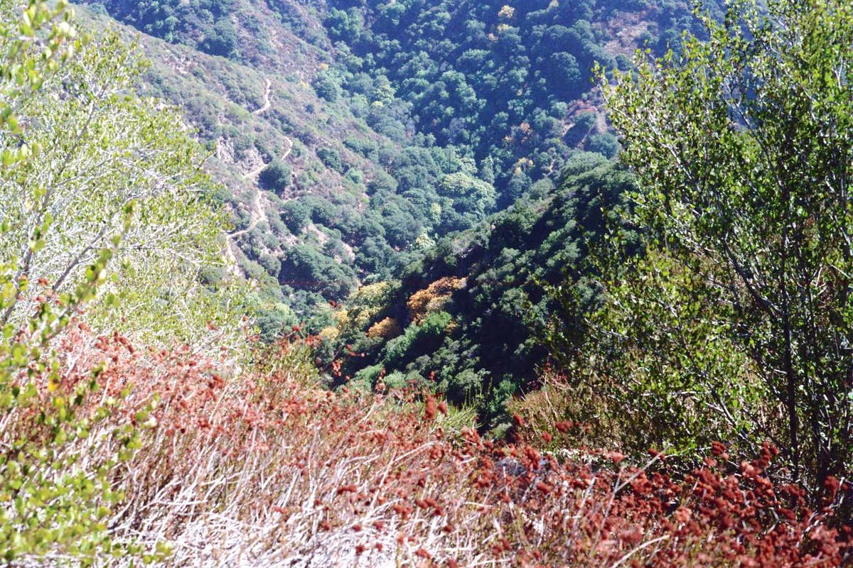 Looking Down into Little Santa Anita Canyon and the Mt. Wilson Trail