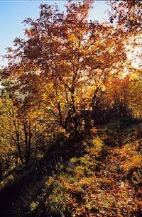 Fall uder the Buio Mount