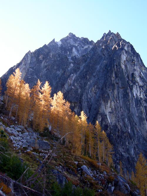 Larches and Dragontail