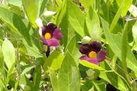 Flora on Domue
