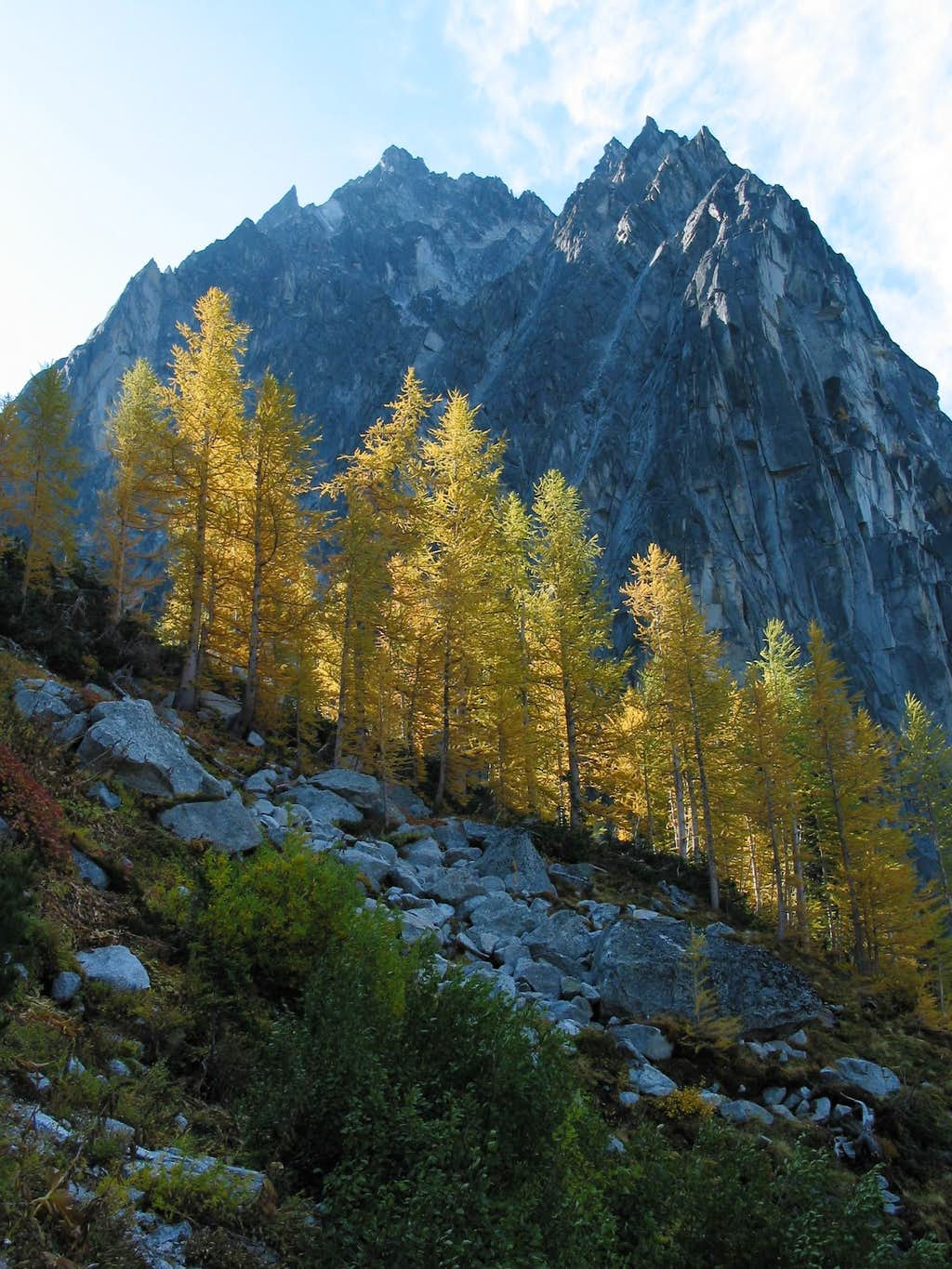 Dragontail and Golden Larches