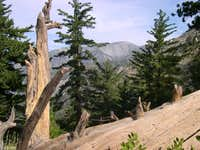 Mt. Baldy as seen from the...