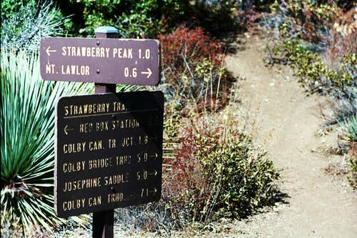 Saddle Between Strawberry Peak and Mt. Lawlor