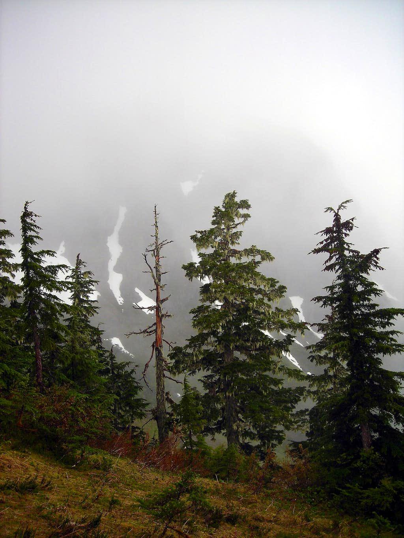 Near Treeline on Mount Jumbo