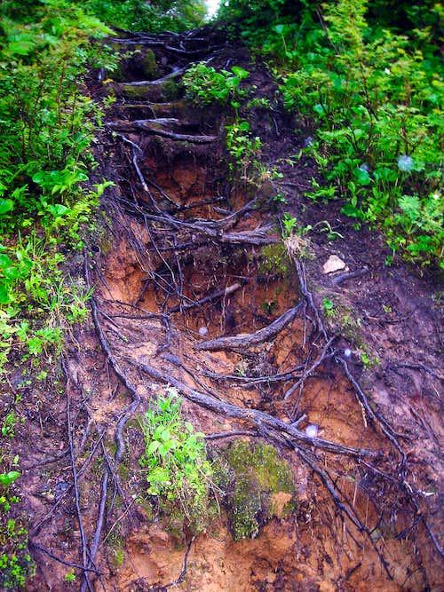 Trail on Mount Jumbo