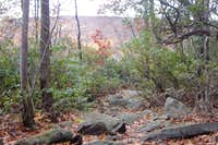 Mountain Laurel Covered Entrance to Wolf Rocks