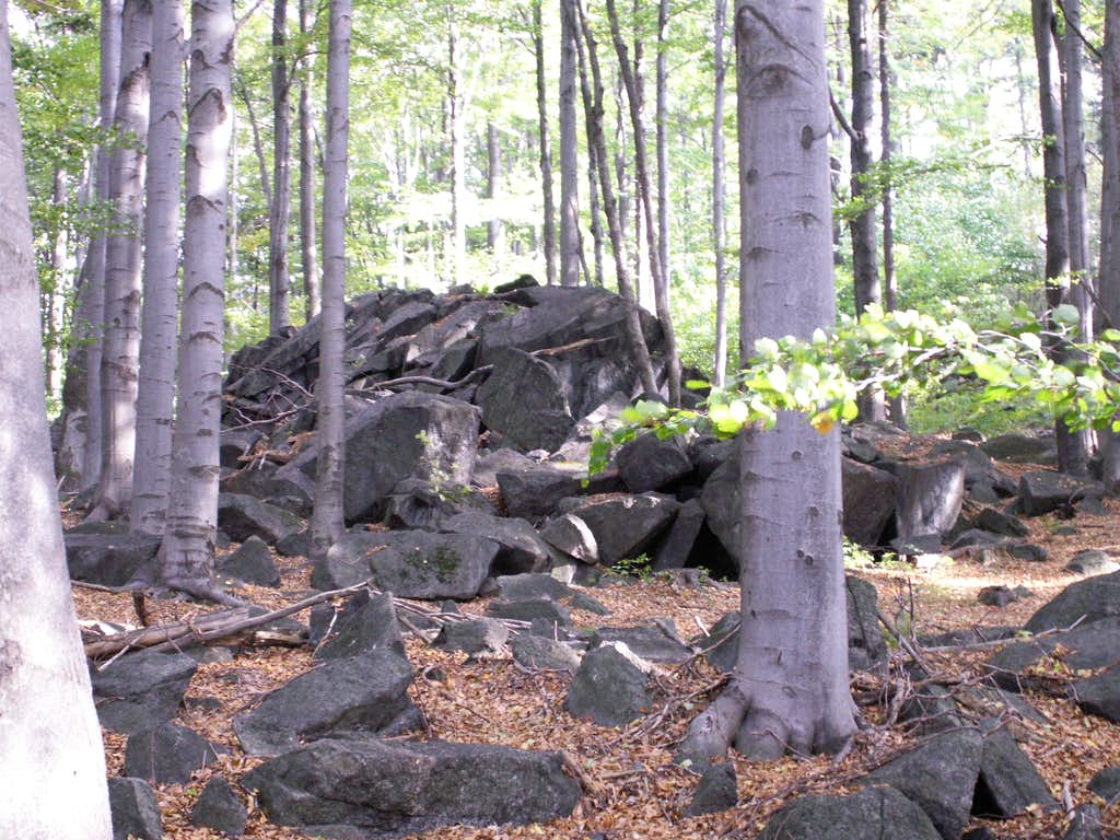 A rocky forest....