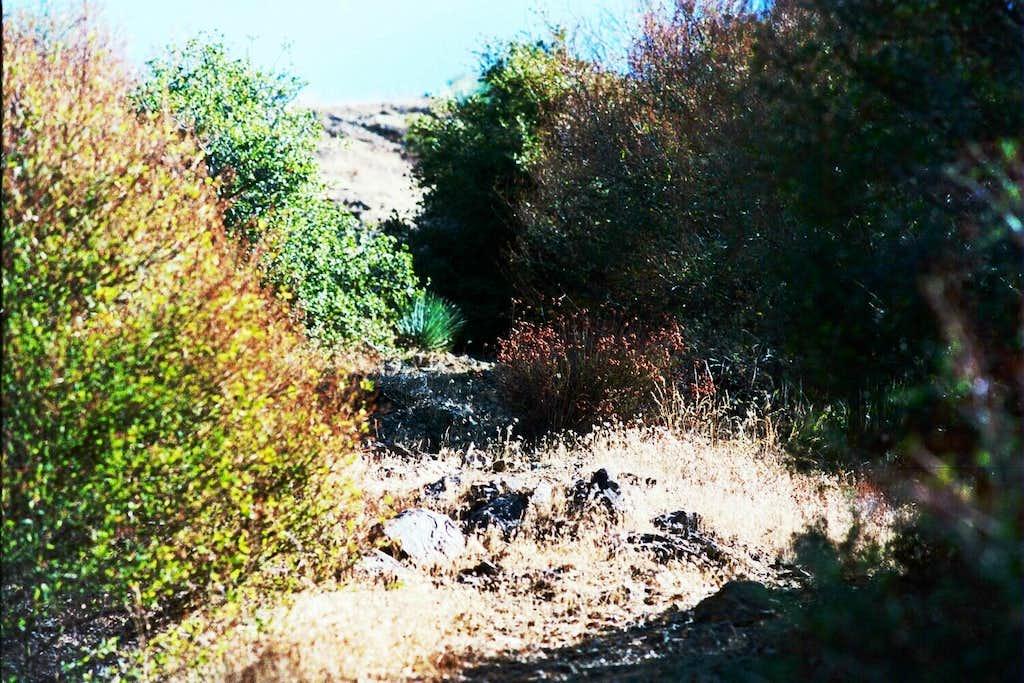 On Mt. Lawlor's West Ridge