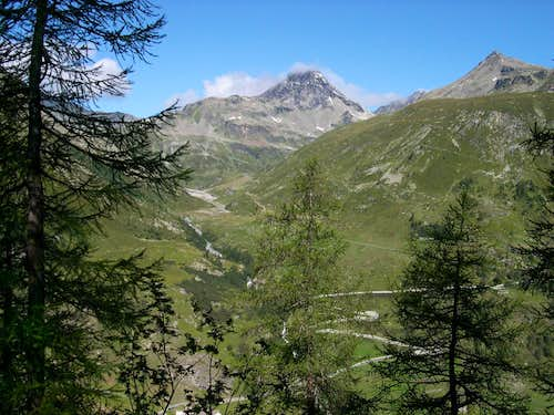 Grande Becca du Mont  and Arp Vieille from the Monumental Forest of larches of Usellières