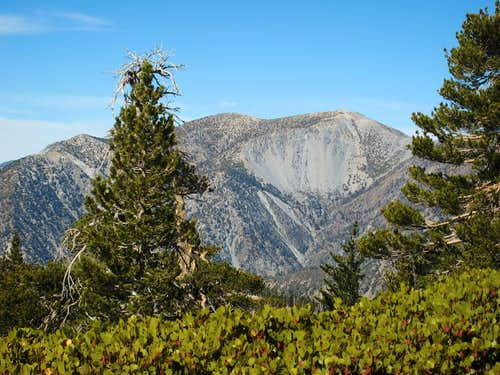 Mt. Baldy (10,064\') from summit of Cucamonga Pk