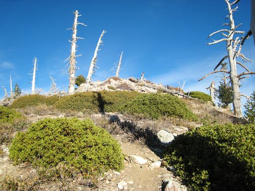 Nearing Summit of Big Horn Pk (8,441\')