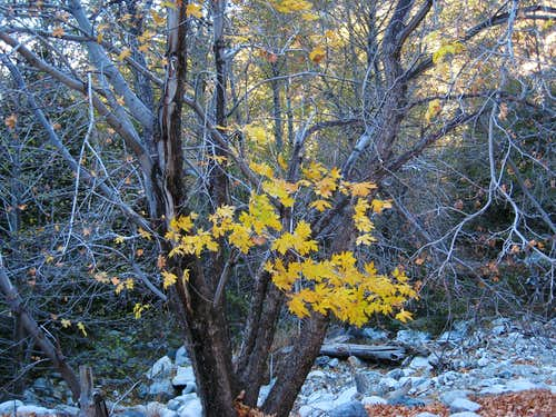 November  Leaves in Ice House Canyon