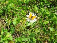 Beautiful flowers near Saas Fee