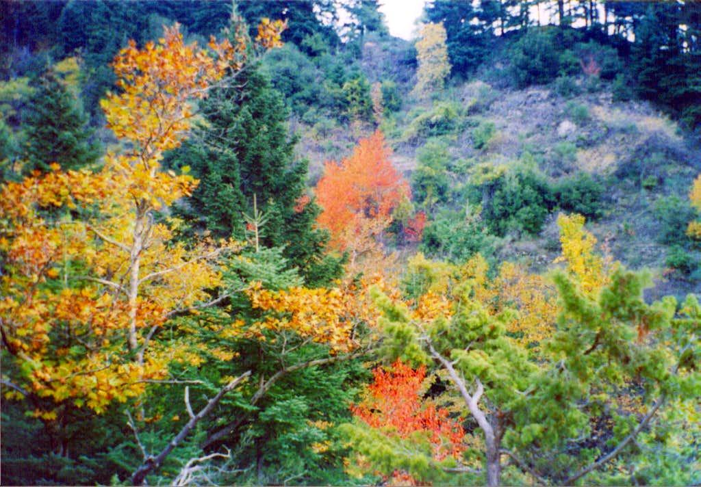 Autumn colours near Athanasios Diakos
