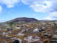 The Tableland, and some fragile alpine vegitation