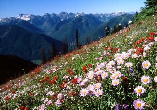 Wildflowers over Sunshine Valley