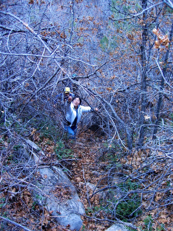 birch hollow bushwacking