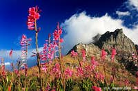 Summer Colours on Table Mountain