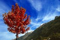 Tree in front of Aiguille de l'M