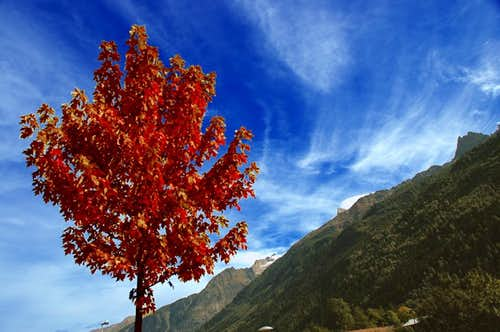 Tree in front of Aiguille de l\'M