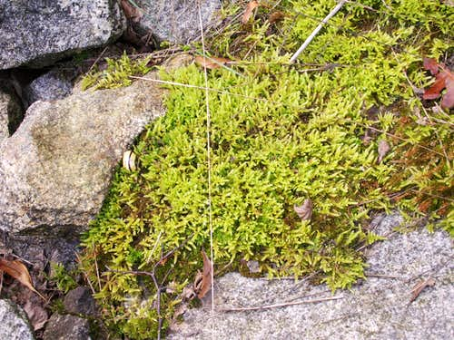 Mosses and...