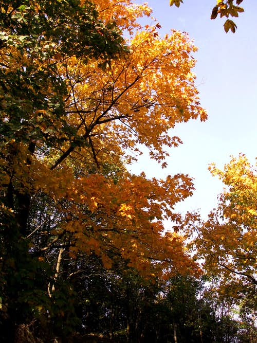 An autumn colour...