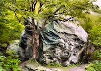 Rockgarten