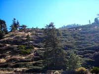 Islip Sadlle Trail