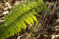 Backlit Fern