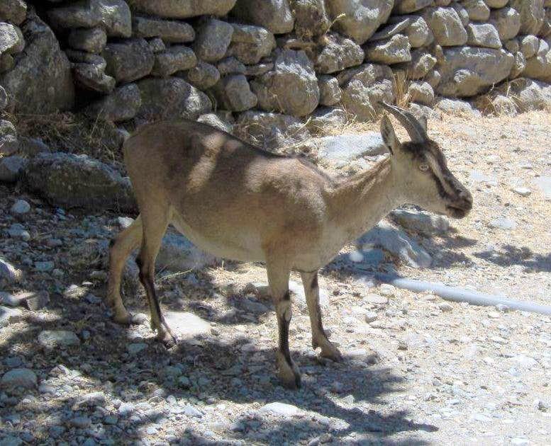 Samaria Canyon