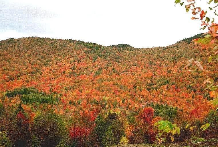 New Hampshire Color
