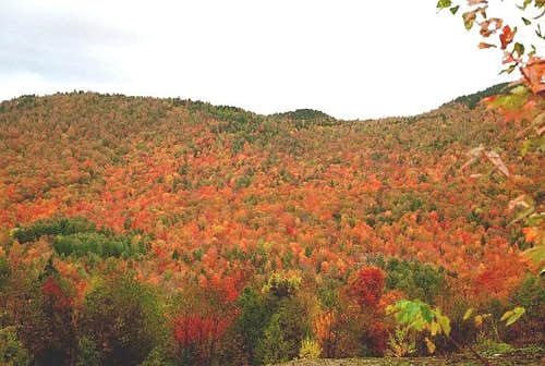 New Hampshire Color