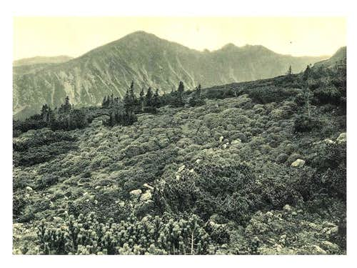 Old Flora of the Tatra Mts.