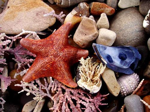 Starfish and Rocks