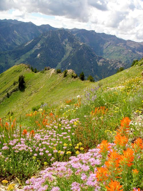 Wildflowers on the east shoulder of Gobblers Knob