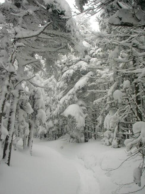 Trails in the Mount Webster...