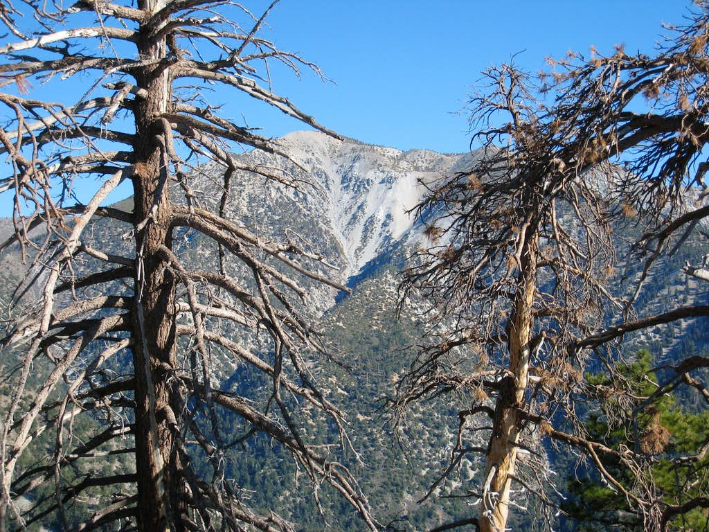 Looking Toward West Baldy and Baldy from South Ridge Iron Mtn.#1