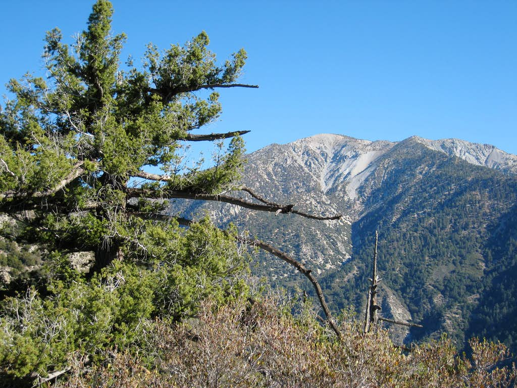 Looking East Towards Mt. Baldy from South Ridge Iron Mtn.#1